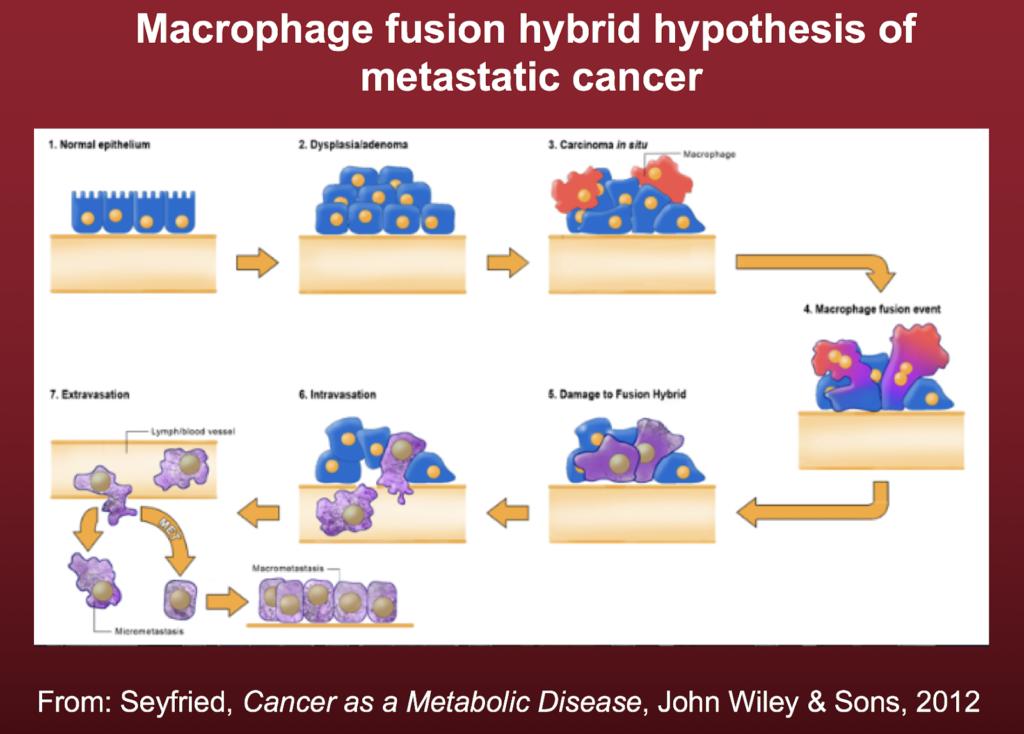 The origin of metastatic cancer cells.