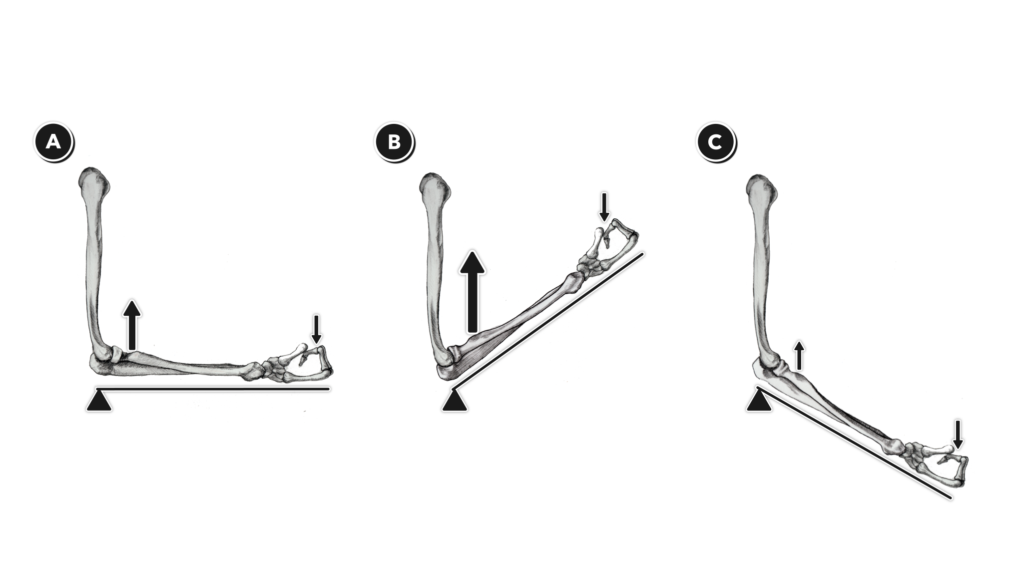 Lon Levers 4 - Third-Class Levers