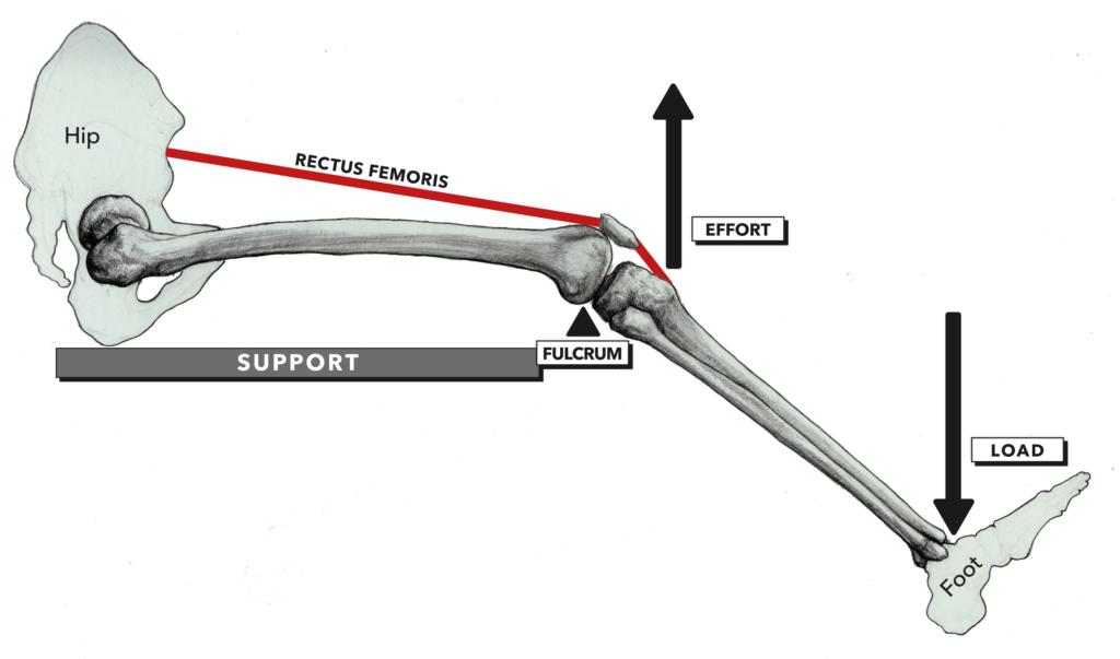 Anatomy of Levers, Part 5