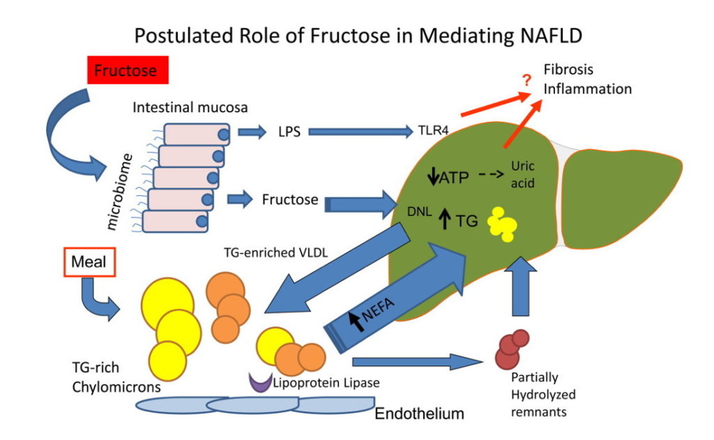 Role of Fructose Graph