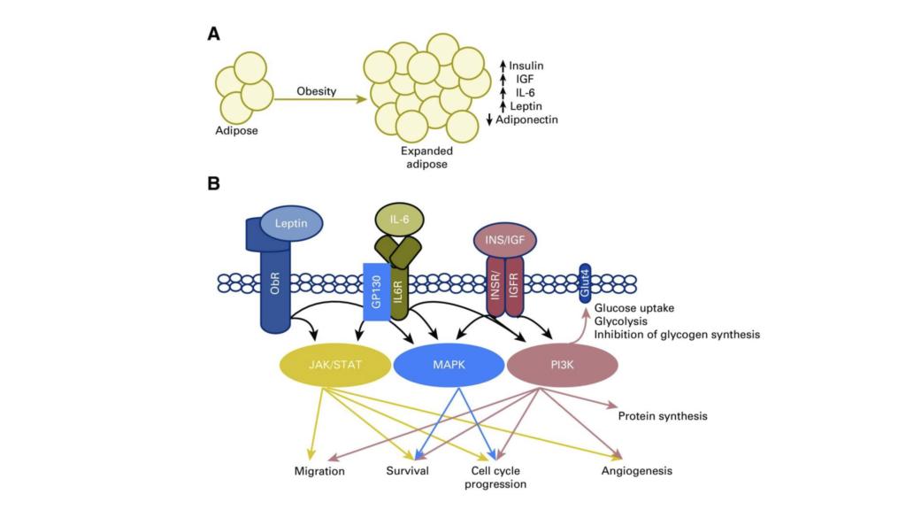 Cancer Mechanisms