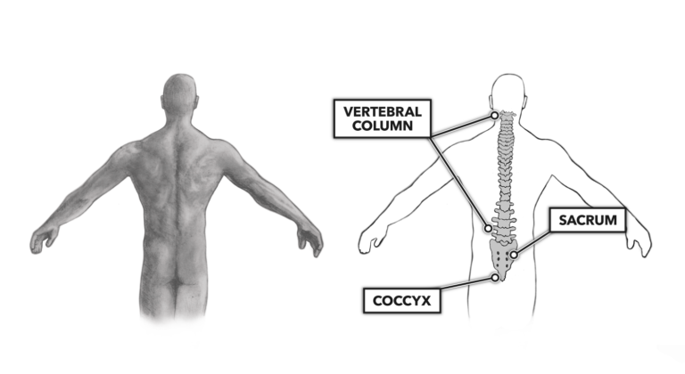 MOVEMENT ABOUT JOINTS: THE VERTEBRAL COLUMN Comments Movement about Joints, Part 8: The Vertebral Column
