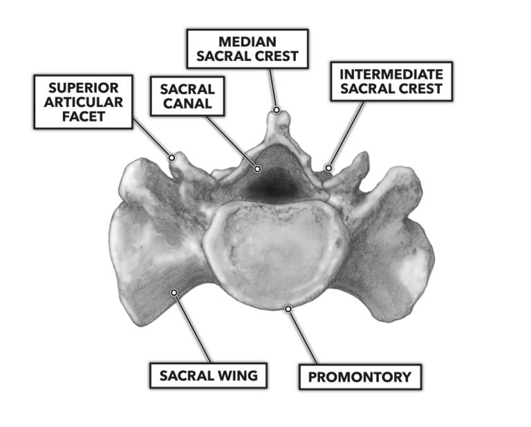 Sacrum structure