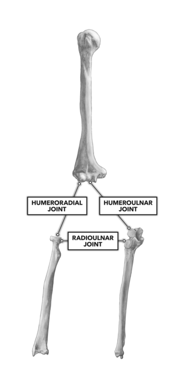 Elbow Joints