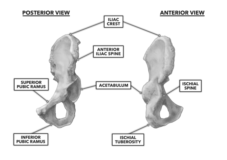 Anterior and Posterior