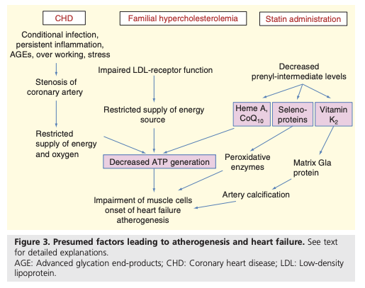 CrossFit | Statins Stimulate Atherosclerosis and Heart failure