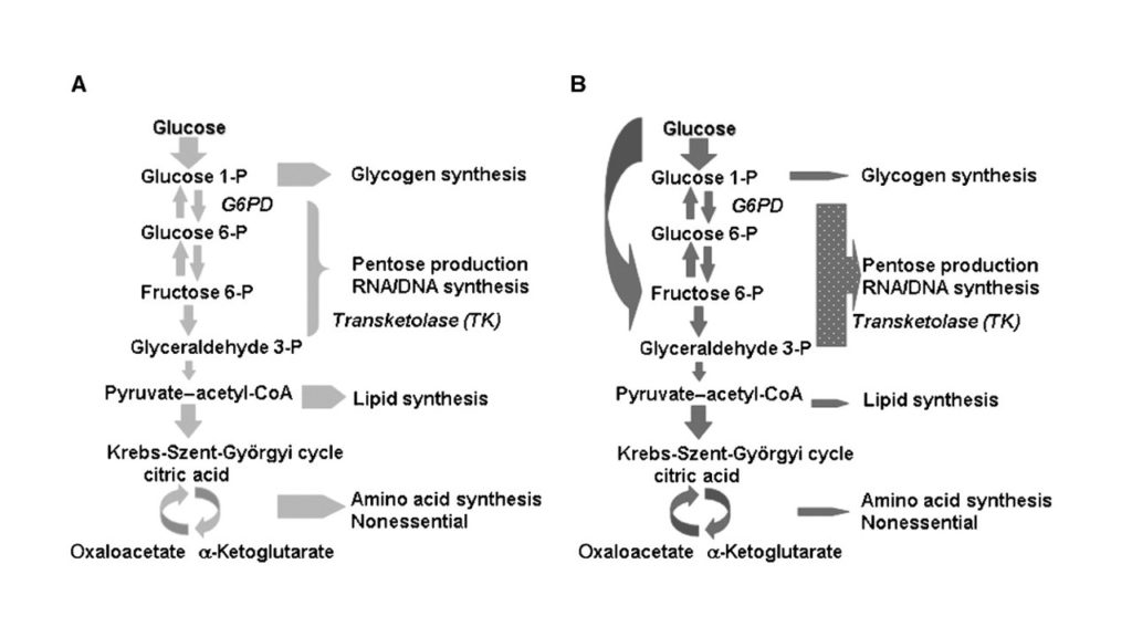 Figure 5 fructose flux