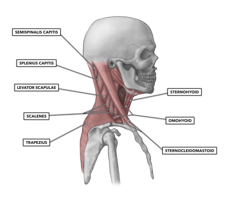 Lateral cervical