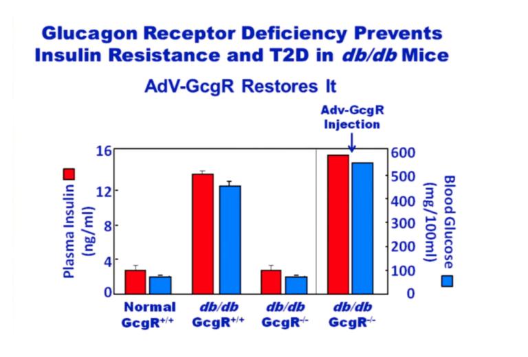 Glucagon Receptors
