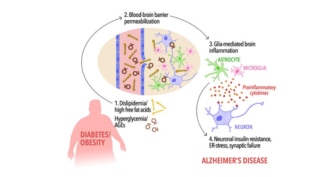 Insulin resistance and Alzheimer's