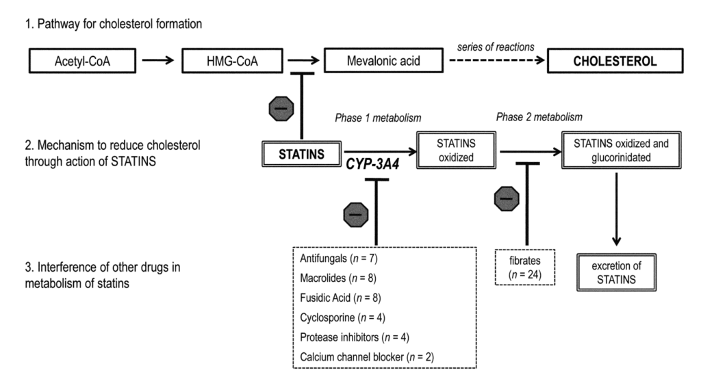 Statins interactions
