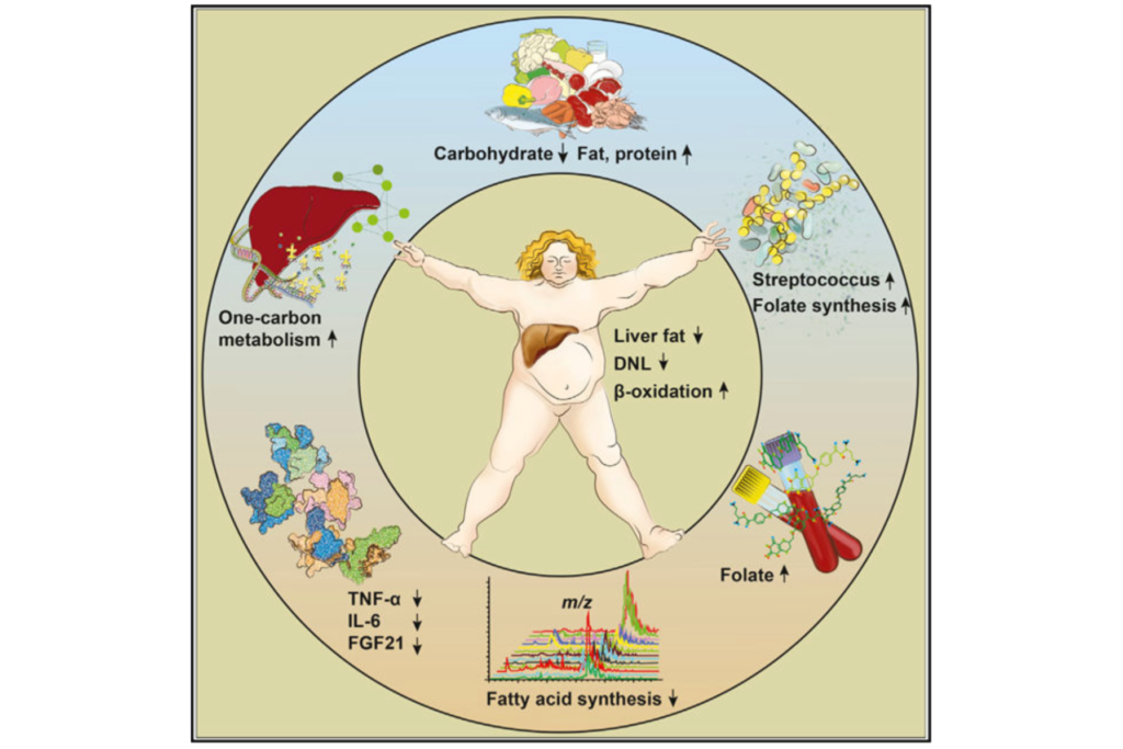 Metabolic Benefits of a Carbohydrate-Restricted Diet