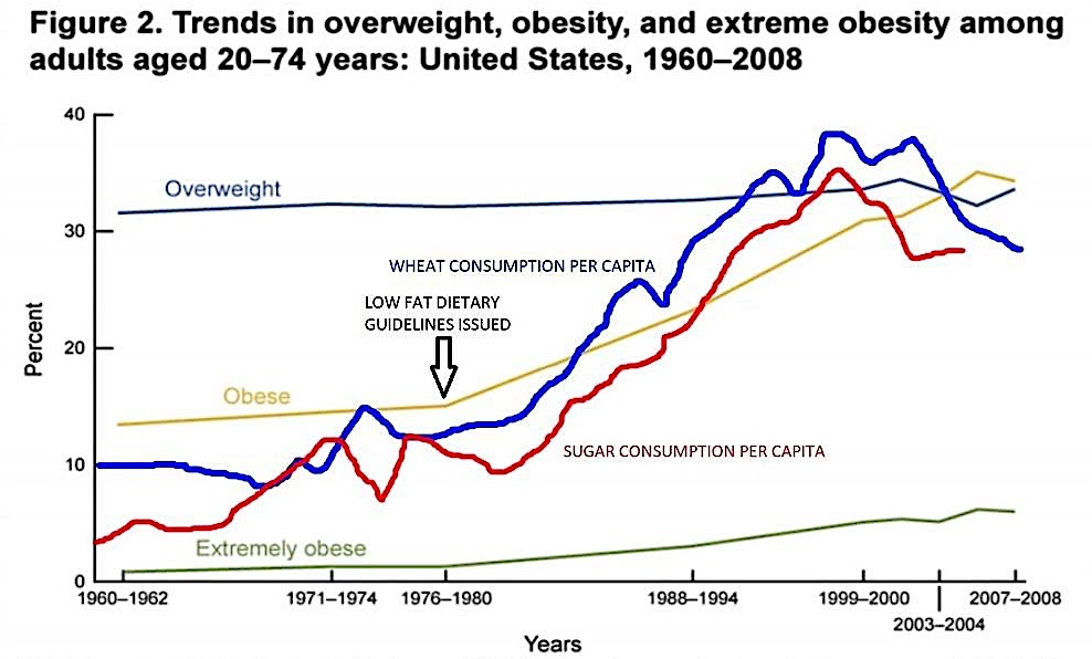 Obesity and Carb Consumption