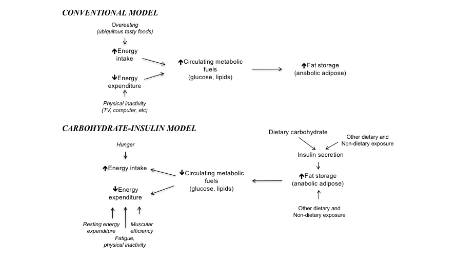 Carbohydrate-Insulin Model
