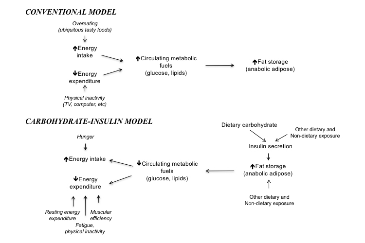 CarbInsulinModel