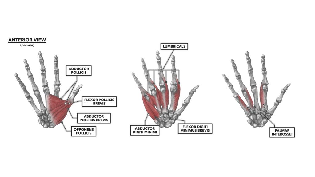 Wrist and hand 3