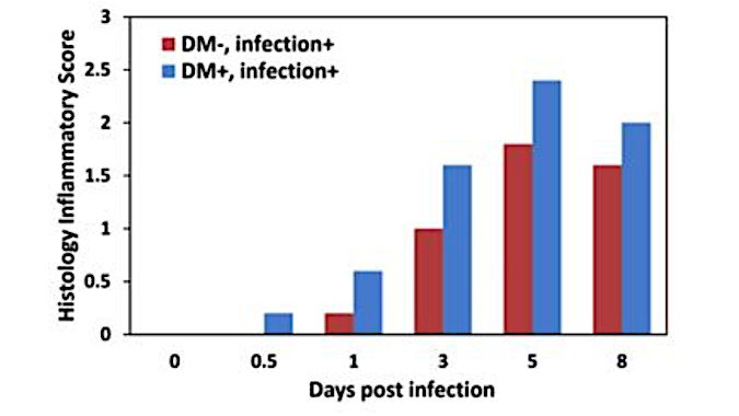Influenza in diabetic mice