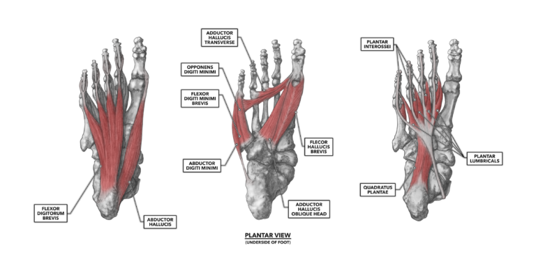 CrossFit | The Foot, Part 1: Muscles