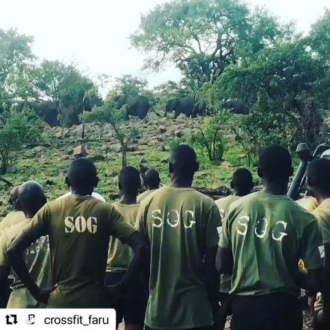 CrossFit Faru scouts guard elephants in the Serengeti